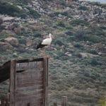 Ελληνικό Κέντρο Περίθαλψης Άγριων Ζώων (ΕΚΠΑΖ), Aegina's Wildlife Hospital
