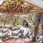 Μούρτζης Φιστίκι και Τοπικά Προϊόντα Αίγινα, Mourtzis Pistachios and Local Products Aegina