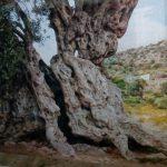 Αρχαίος Ελαιώνας Αίγινας, Aegina Ancient Olive Grove (Eleonas)