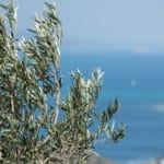 Hellanion Oros Mountain View, Aegina
