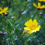 Φύση - Χλωρίδα Αίγινας, Aegina Nature - Flora, Σκοτεινή Αίγινα, Skotini Aegina