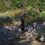 Παληαχώρα Αίγινας, Paliachora Aegina