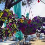 Ammos Restaurant Marathonas Aegina, Εστιατόριο Άμμος Μαραθώνας Αίγινα