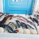 Fresh fish, Aegina
