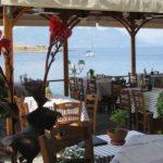 Ψαροταβέρνα Σαρωνίς, Saronis Restaurant, Perdika, Aegina