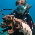 Diving Aegina by Aegina Divers, Καταδύσεις στην Αίγινα